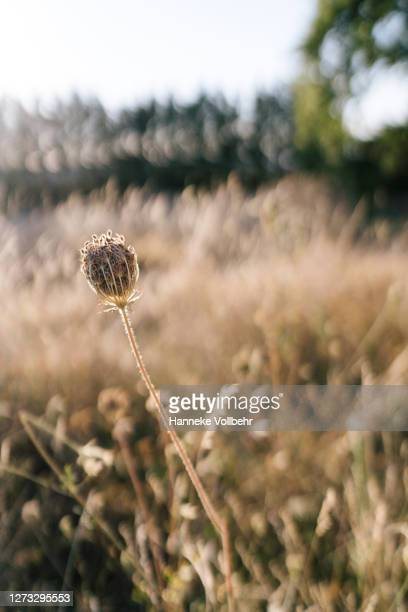 field with grass and flowers just before sunset - kamperen stock pictures, royalty-free photos & images