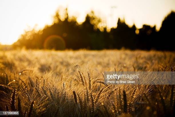 field with long grass - eugene oregon stock photos and pictures