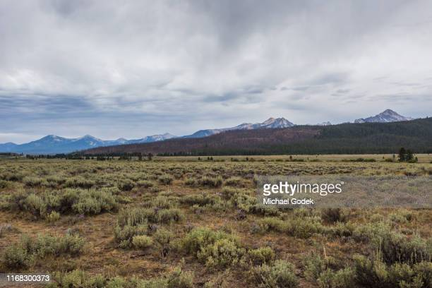 field with sagebrush with mountains in the background - sagebrush stock pictures, royalty-free photos & images