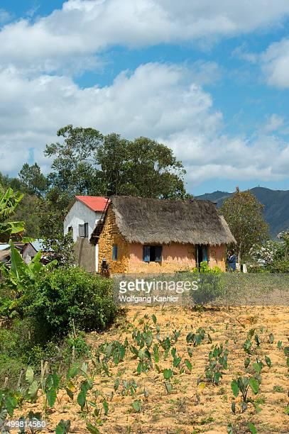 Field with Taro plants and traditional farm house along highway No 2 east of Antananarivo near Moramanga Madagascar