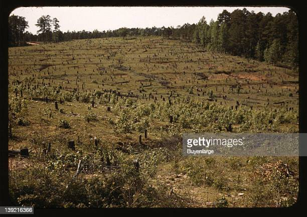 Field with tree stumps 1941