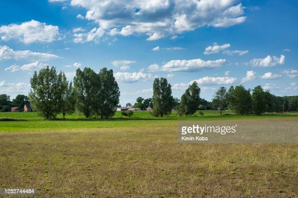 field with trees near the village of merz in brandenburg, germany. - land brandebourg photos et images de collection