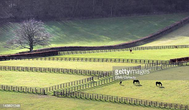 fields and fences - newbury england stock pictures, royalty-free photos & images