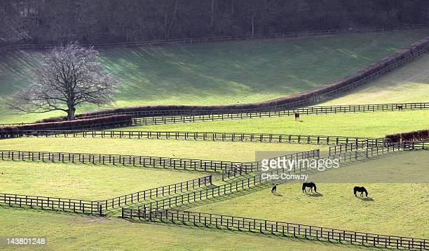 fields and fences - ニューバリー ストックフォトと画像