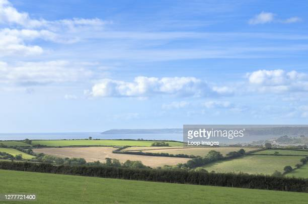 Fields and hedgerows around the coast of Cornwall.