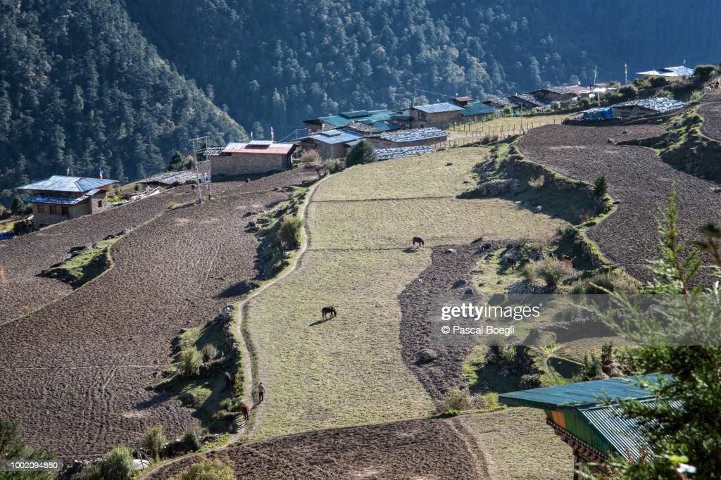 Fields and houses in the village of Laya, Gasa District, Snowman Trek, Bhutan : Stock Photo