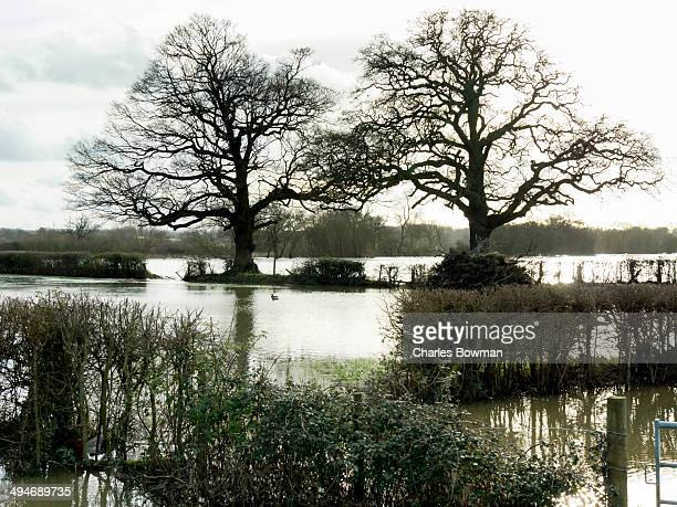 fields are flooded by incessant rains over winter - cobham surrey stock pictures, royalty-free photos & images