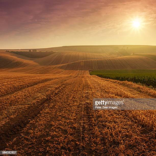Fields at sunrise