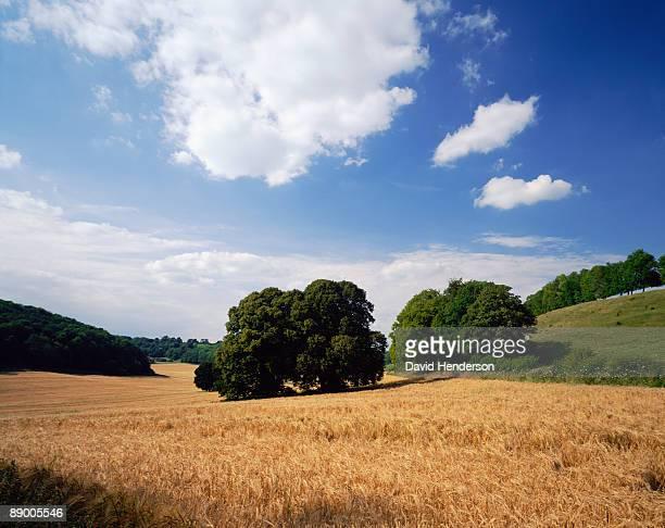 Fields in Milton Abbas, Dorset, England