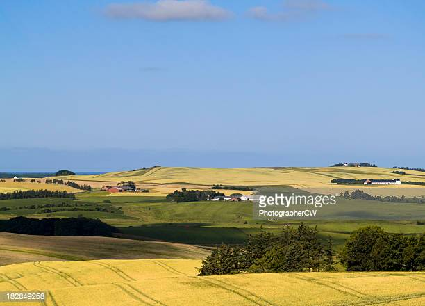 fields in northern jutland, denmark - denmark stock pictures, royalty-free photos & images