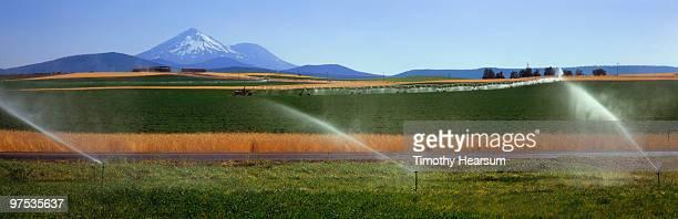 fields of alfalfa and wheat; mt. shasta beyond - timothy hearsum stockfoto's en -beelden