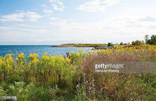 fields of autumn colour - goldenrod stock pictures, royalty-free photos & images