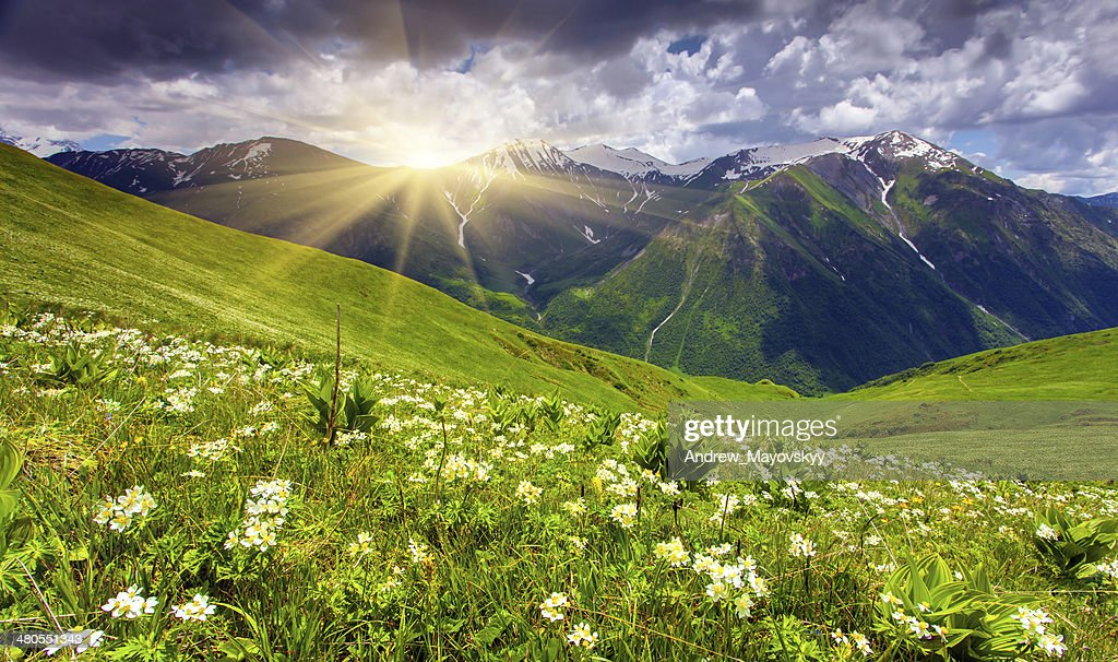 Fields of flowers in the mountains : Stock Photo
