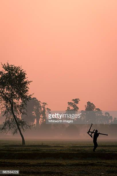 fields of nepal terai region at dawn in winter - terai stock pictures, royalty-free photos & images