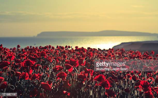 fields of poppies backlit - s0ulsurfing stock pictures, royalty-free photos & images