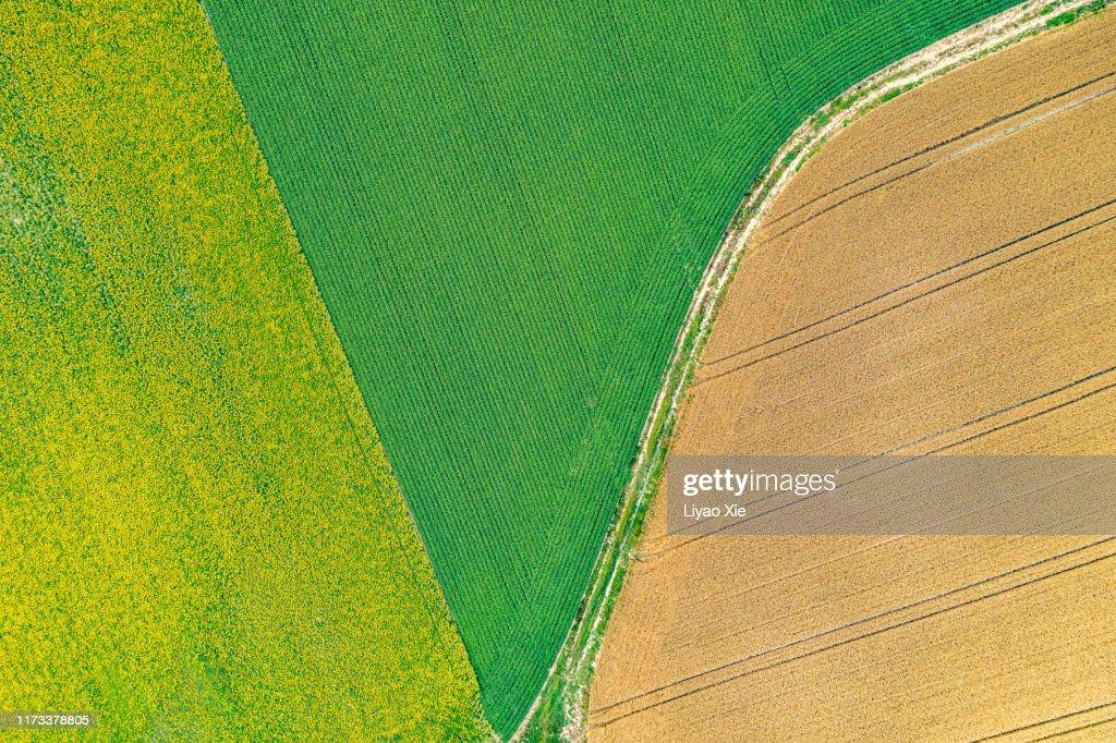 Fields pattern : Stock Photo