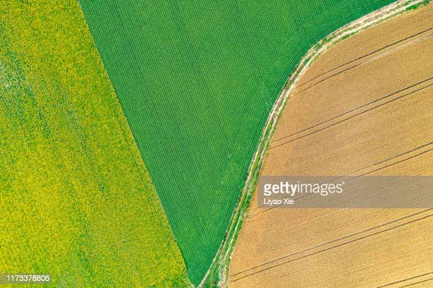 fields pattern - liyao xie stock pictures, royalty-free photos & images
