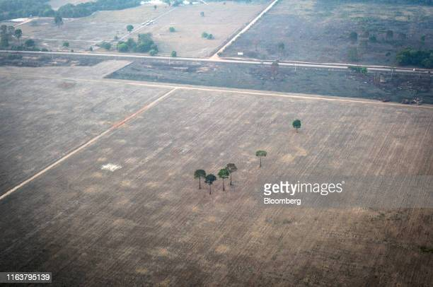 Fields scorched by wildfires stands in the Amazon rainforest in this aerial photograph taken near the Candeias do Jamari region of Porto Velho...