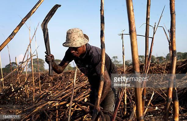 A fieldworker cuts sugar cane by hand near Retalhuleu Guatemala on Friday Nov 25 2011 Sugar supplies will outpace demand by about 5 million metric...