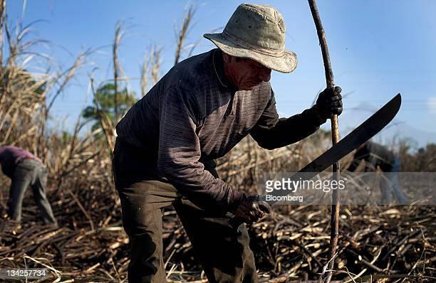 Fieldworker Juan Hernandez cuts sugar cane by hand near Retalhuleu Guatemala on Saturday Nov 26 2011 Sugar supplies will outpace demand by about 5...