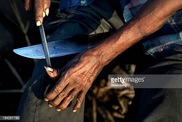 A fieldworker sharpens a machete before returning to cut sugar cane near Retalhuleu Guatemala on Saturday Nov 26 2011 Sugar supplies will outpace...