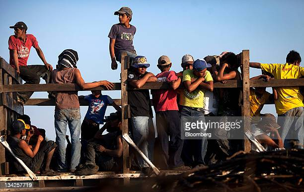 Fieldworkers climb on a truck to go home after a day of cutting sugar cane by hand near Retalhuleu Guatemala on Friday Nov 25 2011 Sugar supplies...