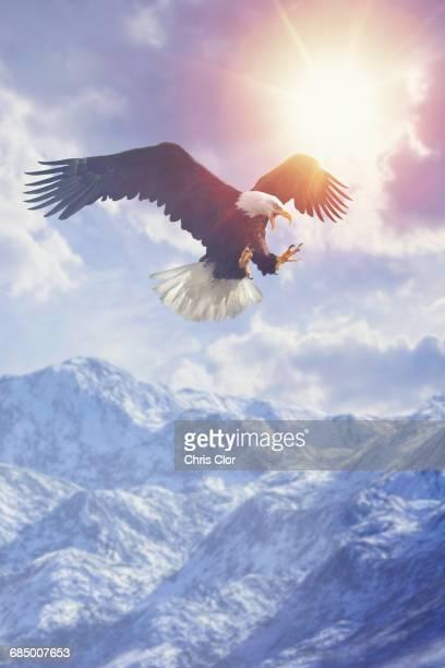 Fierce eagle flying in cloudy sky over mountain range in winter