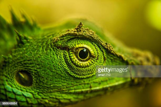 fierce eye - animal eye stock pictures, royalty-free photos & images
