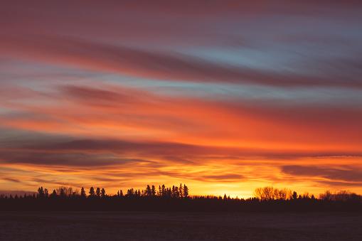 Fiery Tree Line Sunset 485720996
