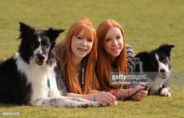 Fifteenyearold twins Emily and Katie Wyatt from Hollywood Birmingham with their brother and sister Bordie Collie dogs Shaun and Chay who will be...