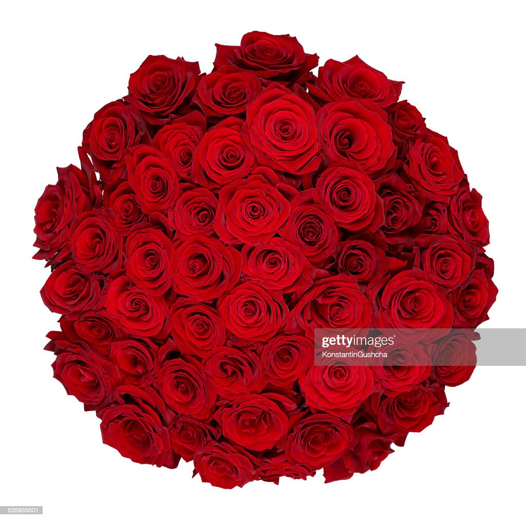 Fifty one roses : Stock Photo