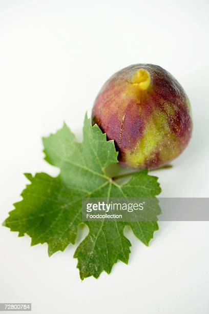 A fig with leaf