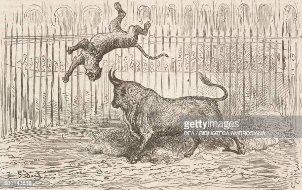 Fight between a bull and a tiger in plaza de toros in Aranjuez, Spain, drawing by Gustave Dore from Travels in Spain by Gustave Dore and Charles...