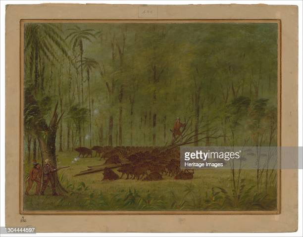 Fight with Peccaries - Caribbe, 1854/1869. The author and a Caribbe Indian coming to the rescue of Smyth. Artist George Catlin.