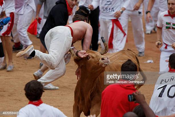 A fighting calf charges over a reveller inside the bullring during the seventh day of the San Fermin Running Of The Bulls festival on July 11 2014 in...