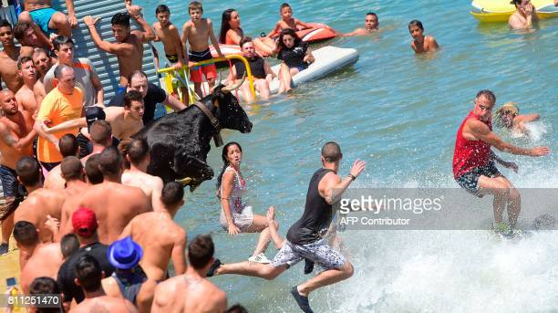 "Fighting cow jumps into the water during the traditional running of bulls ""Bous a la mar"" on Denia's harbour near Alicante on July 9, 2017. / AFP..."