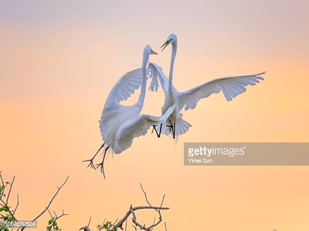 fighting - high_island stock pictures, royalty-free photos & images
