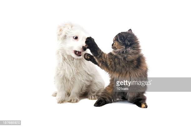 fighting - dog fight stock pictures, royalty-free photos & images