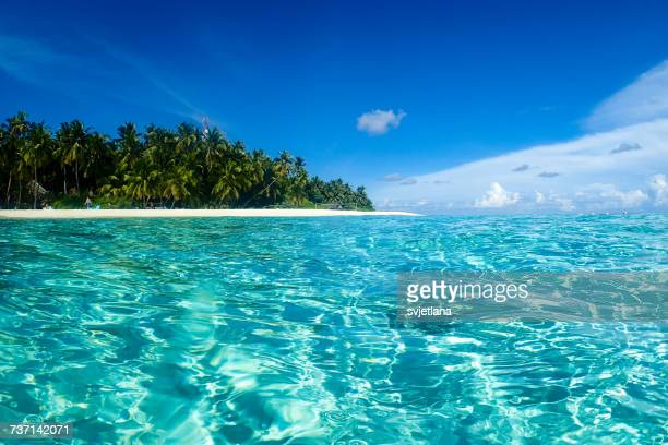 fihalhohi island, kaafu, maldives,  - tropical climate stock photos and pictures
