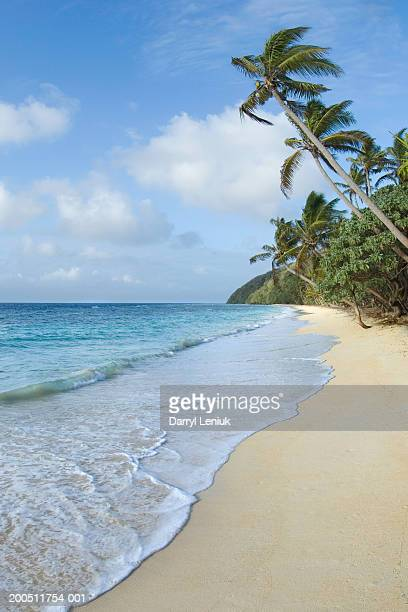 Fiji, Namenalala Island, shoreline and palm trees