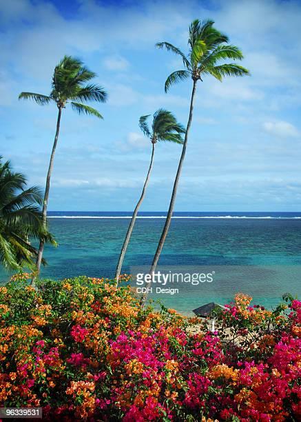 Palmas de Fiji