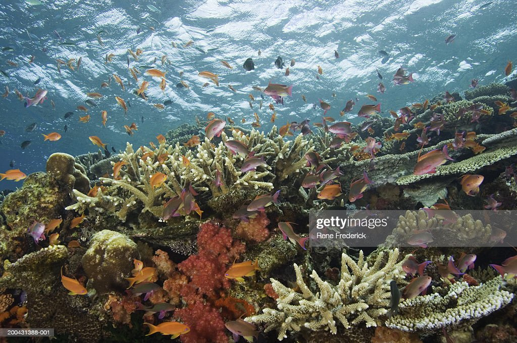 Fiji, Viti Levu, Bligh Water : Stock Photo