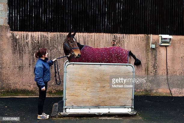 Filbert is weighed ahead of racing at Sandhill Racing Stables on November 12 2015 in Minehead England Sandhill Racing Stables set in 500 hundred...