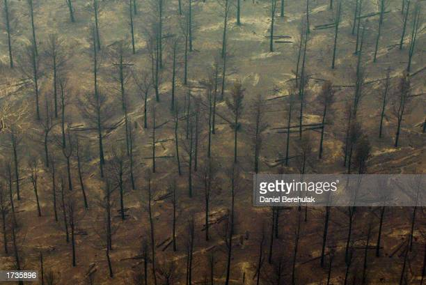 A file photo shows an aerial view of the fire devastated pine trees in the Stromlo forest near the suburbs of Duffy and Chapman on January 21 2003 in...