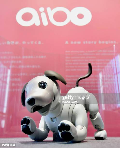 File photo taken at the head office of Sony Corp in Tokyo in January 2018 shows its artificialintelligence equipped Aibo robot dog which was launched...