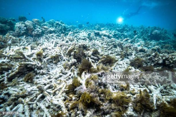 File photo taken in October 2016 shows coral bleaching at the Great Barrier Reef in Australia a World Heritage Site ==Kyodo