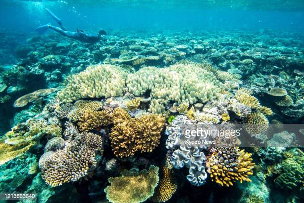 File photo taken Oct. 9 shows corals in the Great Barrier Reef in waters off the northeastern coast of Australia.