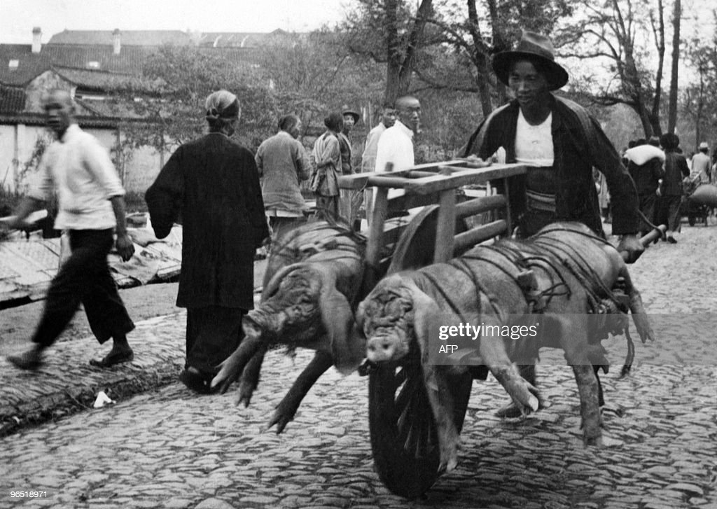 File picture dated 27 November 1937 showing a Chinese peasant carrying his pigs with a cart, because of the requisitioning of trucks and vehicules. The 2nd Chinese-Japanese war started in 1937 with the Marco Polo Bridge Incident, near Beijin, pretext for the Japanese to launch a full-scale invasion of China, using the conquered Manchuria as a launching base for their troops. The war ended with the surrender of Japan in 1945.