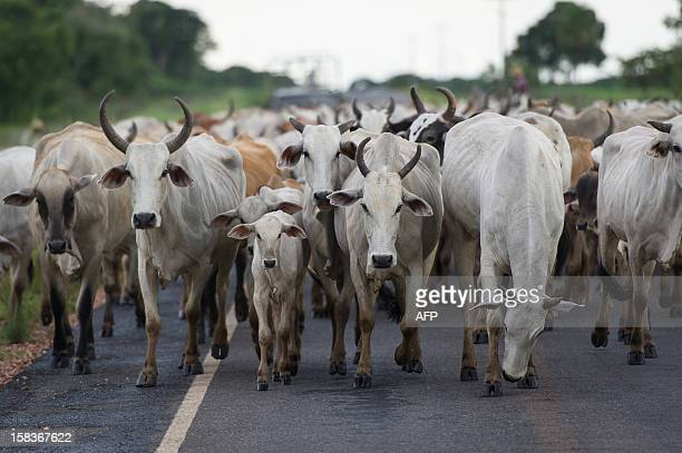File picture of cattle along a road near Pocone Mato Grosso state western Brazil on January 31 2011 China and South Africa have joined Japan in...