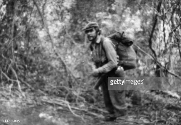 File picture taken in 1967 near Nancahuazu in Bolivia showing Ernesto Che Guevara in a tree as he was trying to organize the revolution in Bolivia...